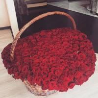 501 красная роза в корзине R081