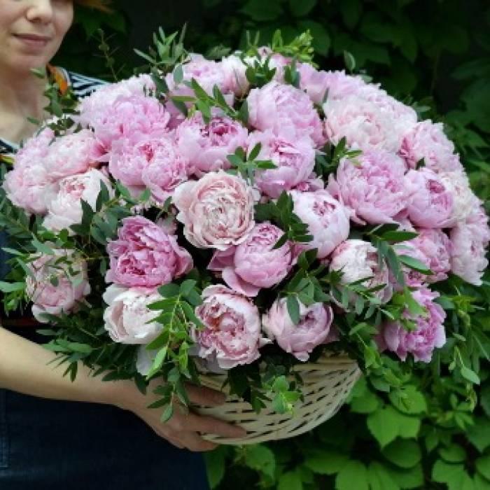 Корзина 65 розовых пионов R961