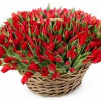 Корзина 151 красный тюльпан R007
